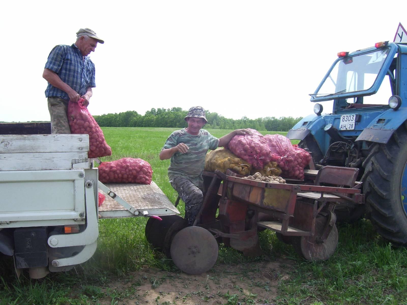Особенности посадки картофеля под плуг вручную и мотоблоком 99